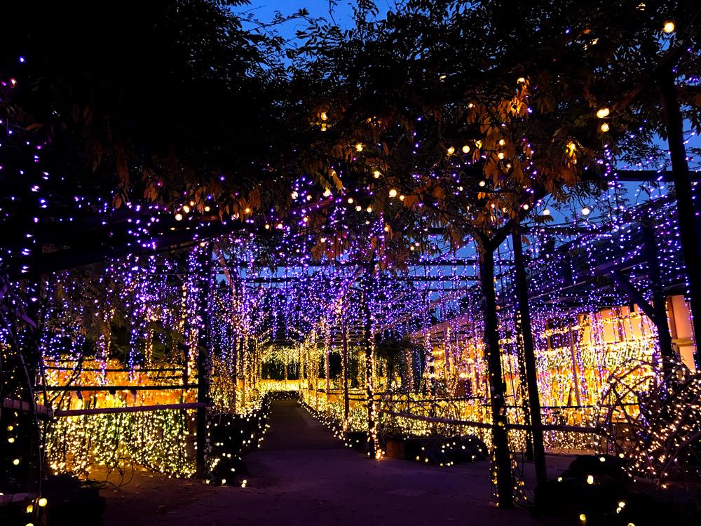 【由志園のライトアップイルミネーション2018】藤の庭園